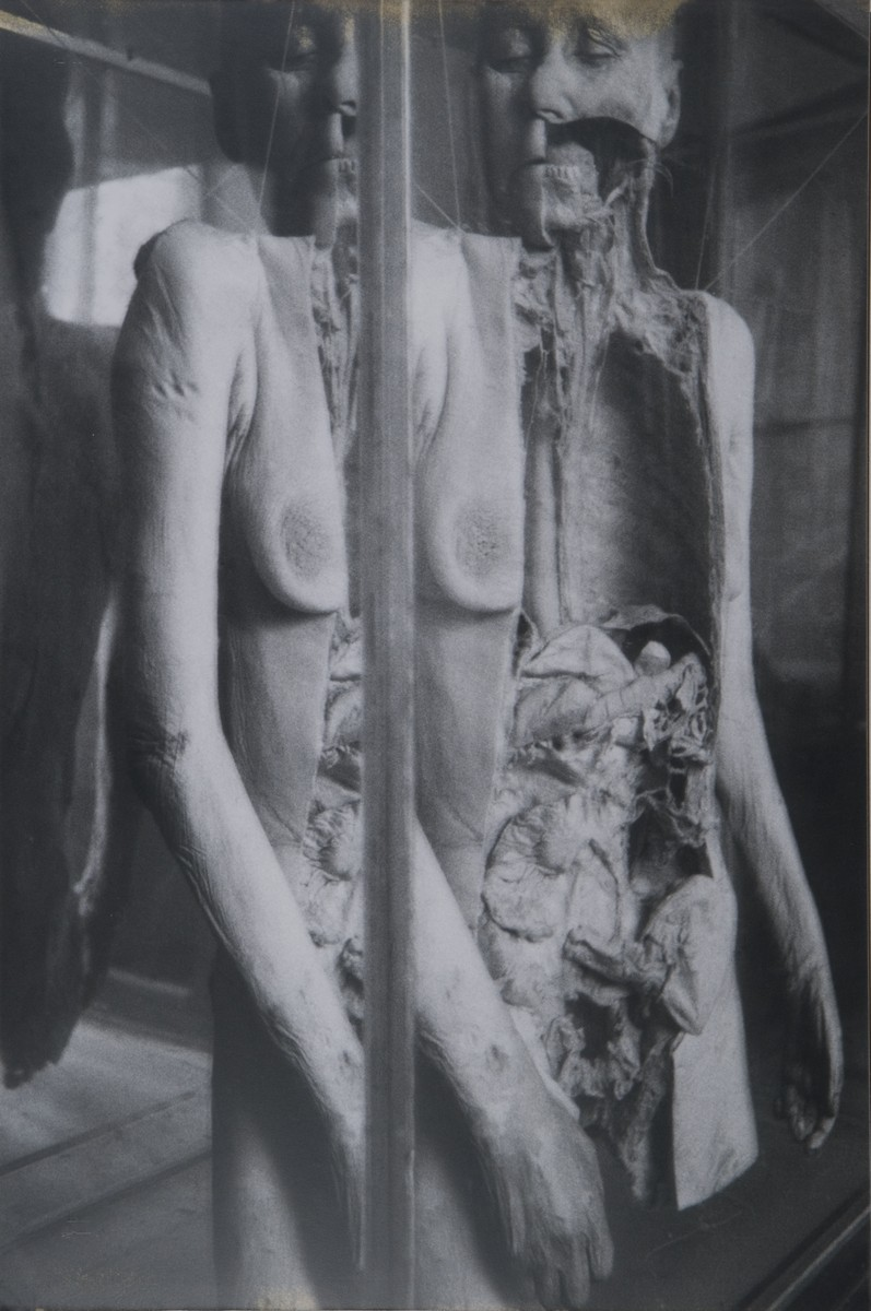 Kuzyszyn Konrad, Collegium Anatomicum, 70 x 100cm