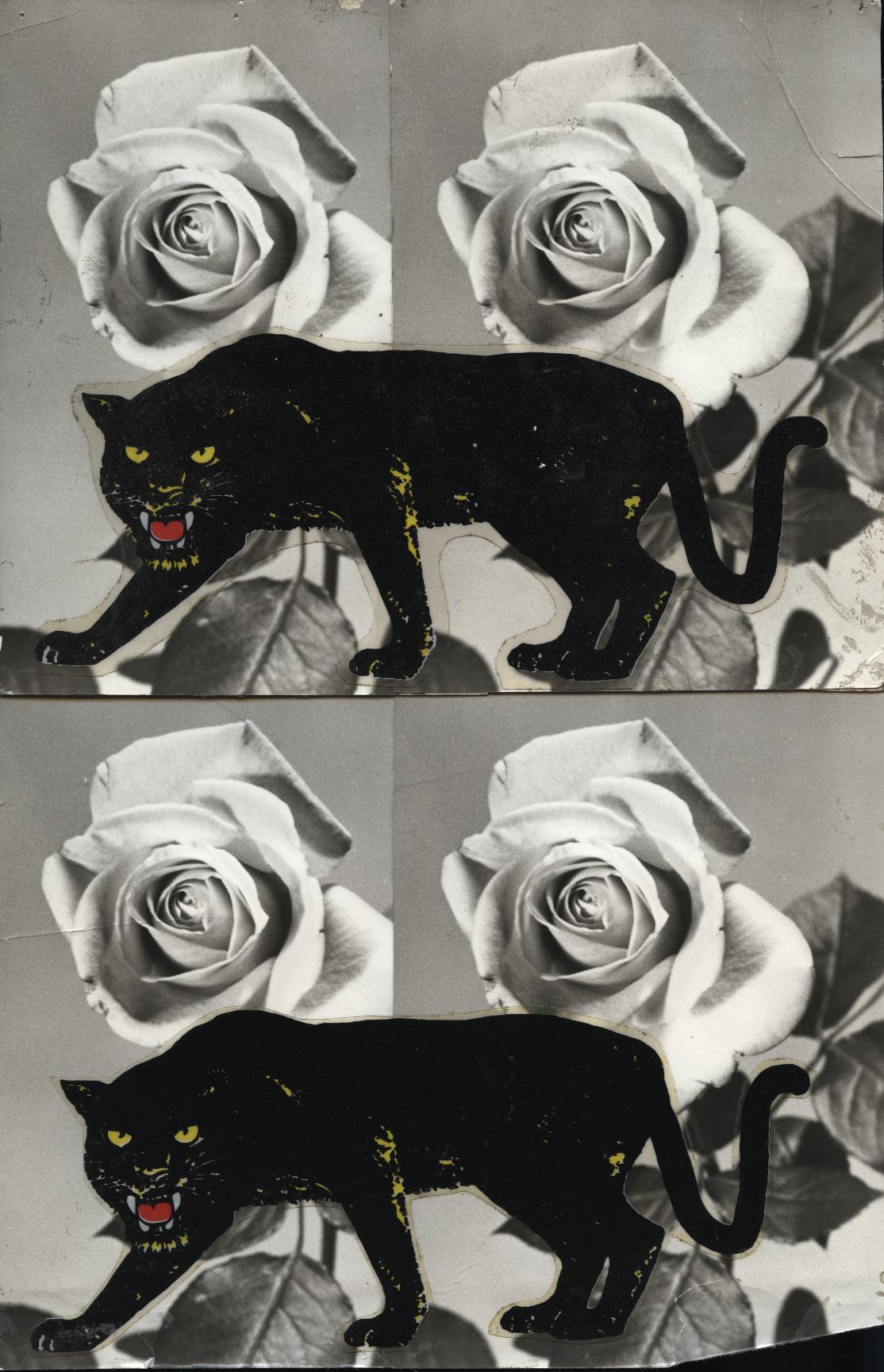 Janusz Petrykowski, z cyklu Ścieżka dzikich zwierząt, lata 80. XX w. (dzięki uprzejmości Stefana Okołowicza)