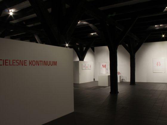 """""""Cielesne kontinuum"""", Galeria Sztuki Wozownia w Toruniu, 2014, widok wystawy, fot. Kazimierz Napiórkowski (źródło: dzięki uprzejmości Galerii Sztuki Wozownia)"""