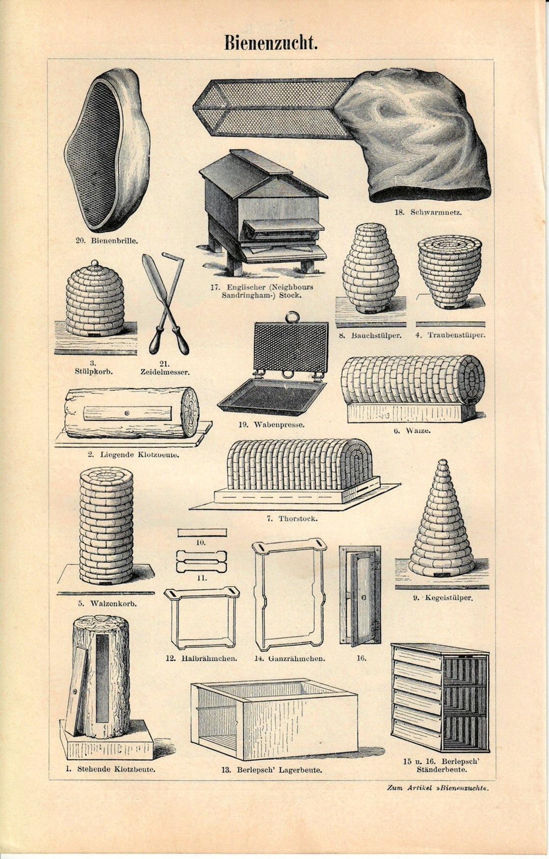 """Maurice Maeterlinck, """"Życie pszczół"""" – rycina z książki (źródło: materiały prasowe wydawcy)"""