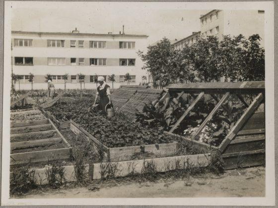 Ogród warzywny na osiedlu WSM na Zoliborzu, lata trzydzieste XX wieku, Izba Pamięci WSM (źródło: materiały prasowe organizatora)