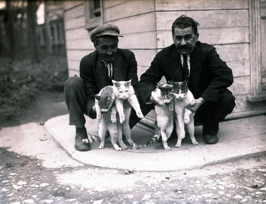 Stambulskie koty. Fotografia, początek lat 30. XX w., autor nieznany, kolekcja fotografii Suna ve İnan Kıraç Vakfı (źródło: materiały prasowe organizatora)