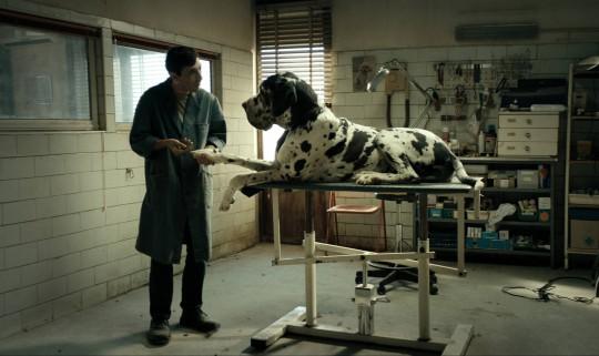 """""""Dogman"""", reż. Matteo Garrone, M2 Films, 2018 (źródło: materiały prasowe dystrybutora)"""