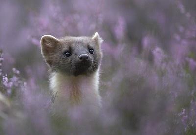 Staffan Widstrand / www.wild-wonders.com
