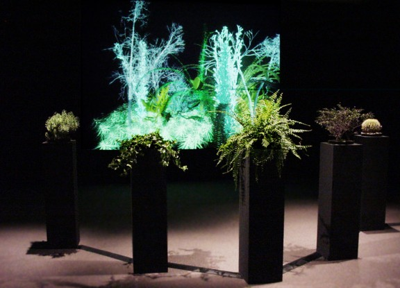 """Christa Sommerer, """"A Plant grow"""", 2008 rok"""