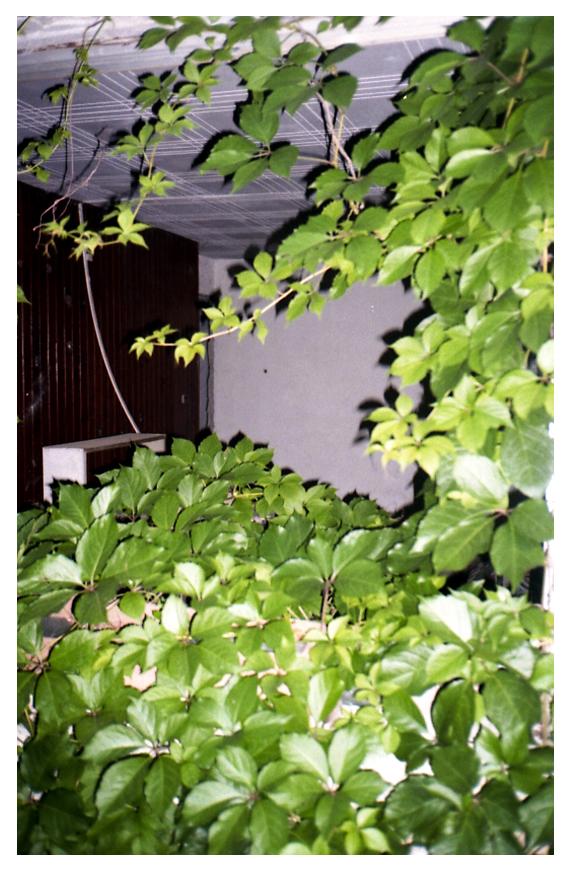 Dawid Misiorny, Communal Trees/Drzewa Państwowe (źródło: materiały prasowe Galerii Novej)