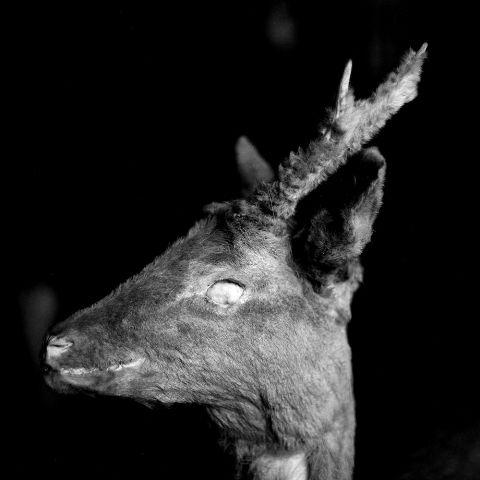 """Fot. Andrei Liankevich """"Pagan"""" (źródło: mateiały prasowe Galerii)"""