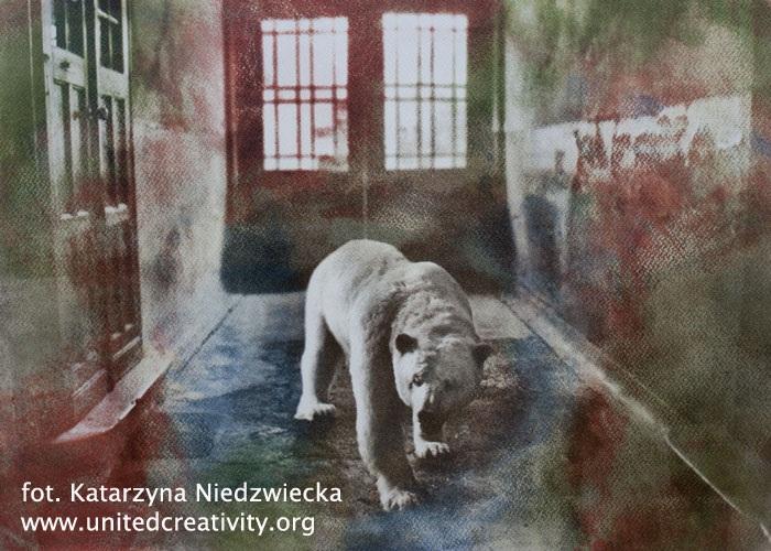 Fot. Katarzyna Niedźwiedzka (źródło: materiały prasowe Biura)