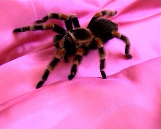 "Bogna Burska, ""Arachne"", 2003 (źródło: materiał prasowy)"