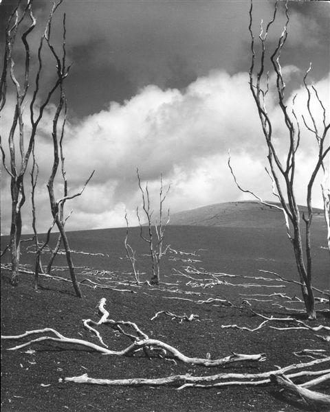 """Stefan Arczyński, z cyklu """"Drzewa"""", Hawaje, 1969 (źródło: materiały prasowe organizatora)"""