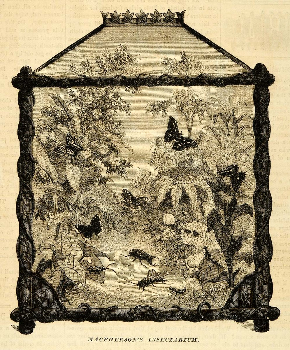 Macpherson's insectarium (źródło: materiały prasowe organizatora)