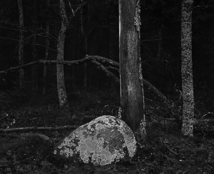 """Fot. Michał Jeliński, """"Wszystko, co oddycha"""" (źródło: materiały prasowe organizatora)"""