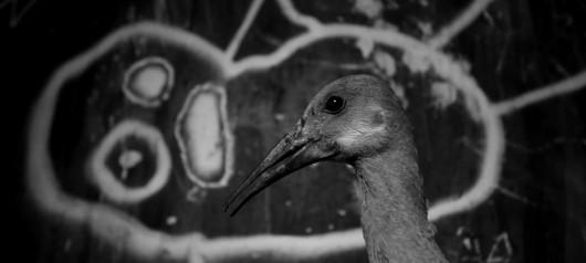 "Roger Ballen, ""Asylum of the birds"", kadr wideo (źródło: materiały prasowe organizatora)"