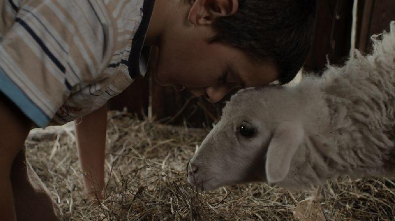 """Kadr z filmu """"Mleczny brat"""", Konkurs Młodego Kina, 39. Festiwal Filmowy, Gdynia (źródło: materiały prasowe organizatora)"""