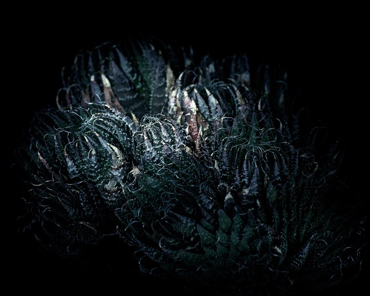 """Frank Ammer, """"Aloes"""" (źródło: materiały prasowe organizatora)"""