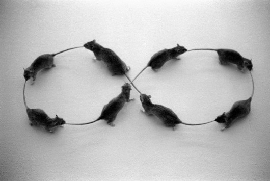 """Zbyszko Trzeciakowski, """"Myszki"""" (źródło: materiały prasowe organizatora)"""
