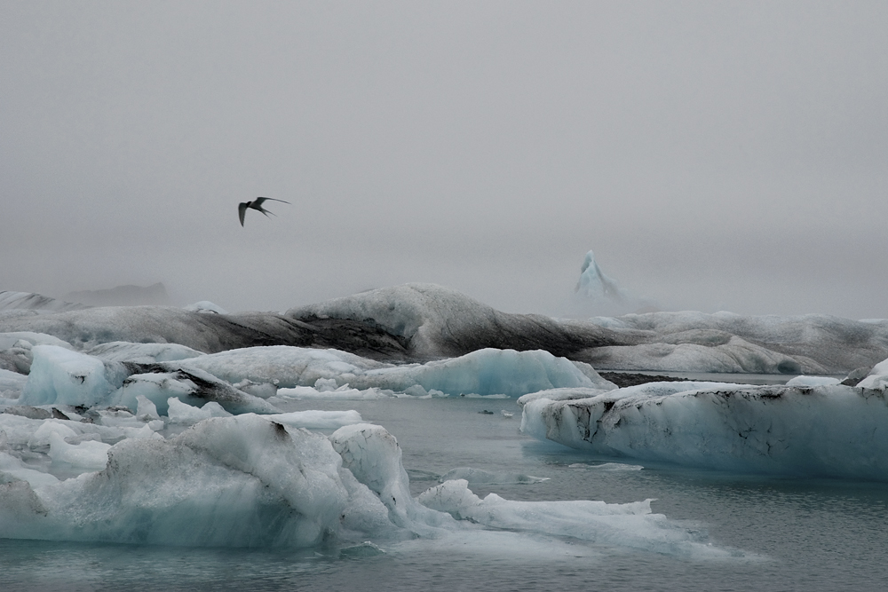 Fot. Iwona i Adam Balcy, Laguna lodowcowa Jőkulsárlón, południowo-wschodnia Islandia (źródło: materiały prasowe organizatora)