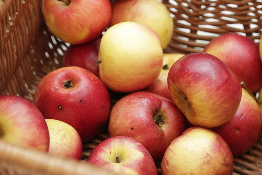 """Spotkanie, """"Jabłko pierzchliwej Atalanty. Owoc w sztuce i kuchni renesansu"""" (źródło: materiały prasowe organizatora)"""