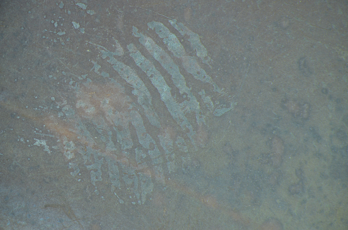 Fotografia mikroskopowa, fragment emulsji fotograficznej, fot. M. Suprunik (źródło: materiały prasowe organizatora)