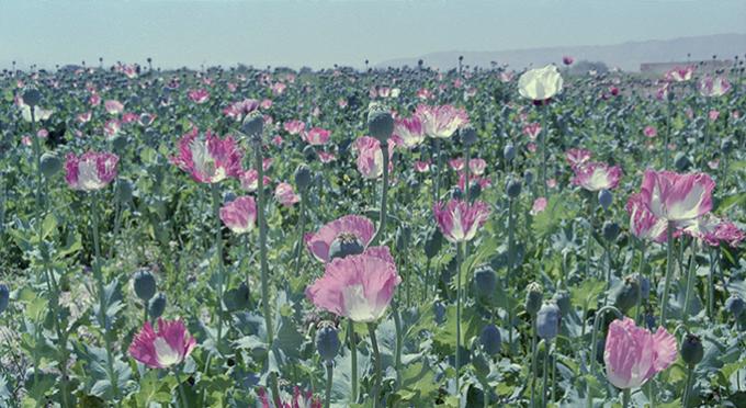 """Robert Knoth i Antoinette de Jong. Mak. Śladami afgańskiej heroiny"" (źródło: materiały prasowe organizatora)"