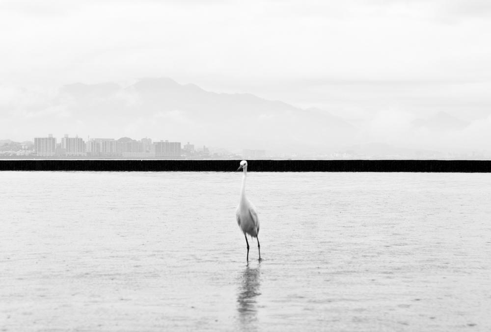 "Marcin Ryczek, ""Hiroshima - Phoenix Rising From The Ashes"", (źródło: materiały prasowe organizatora)"