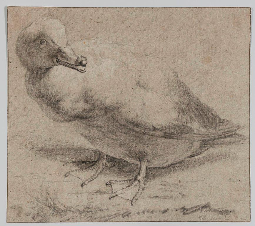 """Artysta holenderski, """"Kaczka"""", ok. 1650 (źródło: materiały prasowe organizatora)"""