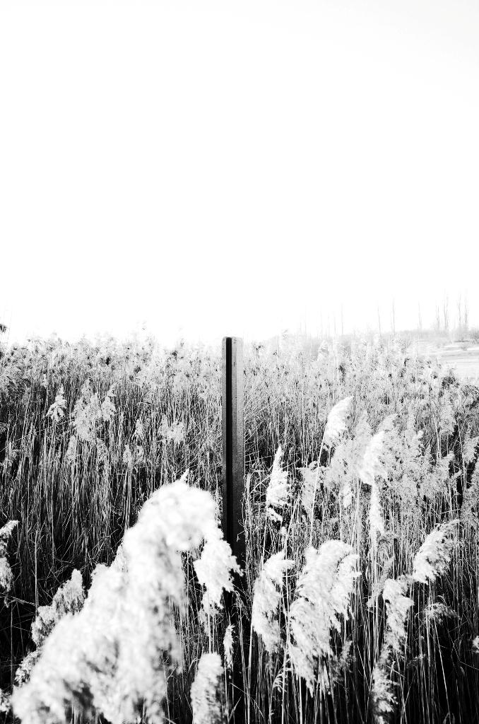 """Paweł Dudziak, """"bez tytułu"""", 2016, 70 x 46,4 cm, © Paweł Dudziak (źródło: materiały prasowe organizatora)"""