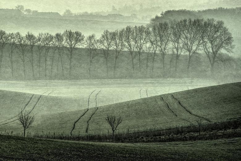 Morawy, Fot. Piotr Borowicz (źródło: materiały prasowe organizatora)