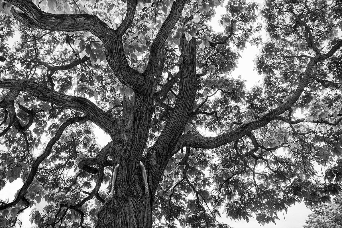"""Szymon Brodziak, """"Drzewo"""" (źródło: materiały prasowe organizatora wystawy)"""