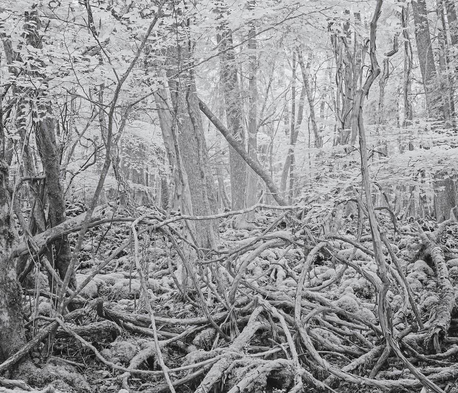 """Tomasz Lazar, """"Morze drzew"""" (źródło: materiały prasowe organizatora)"""