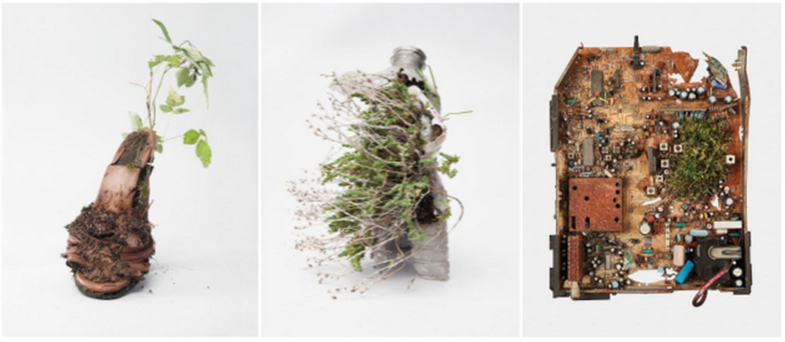 """Diana Lelonek, """"Center for the Living Things"""" (Instytut dla rzeczy żywych) (źródło: materiały prasowe organizatora)"""