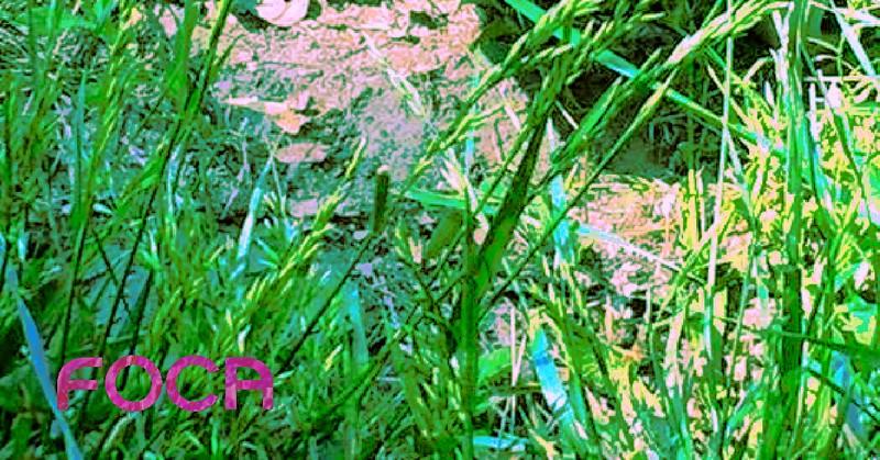"""""""Zazieleniła się sztuczna trawa"""" (źródło: materiały prasowe organizatora)"""
