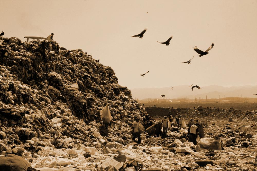SEPIA JARDIM GRAMACHO LANDSCAPE WITH VULTURES Photograph of by Vik Muniz, courtesy of Vik Muniz Studio STILL