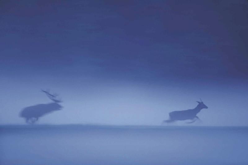 Jean-Michel Lenoir (Francja), Jelenie i niebieska mgiełka
