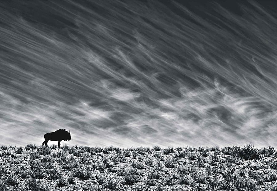 copyrights: Morkel Erasmus (RPA), Ocalała na pustyni