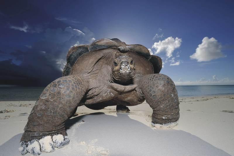 copyrights: Thomas P. Peschak (RPA/Niemcy), Gigantyczna przeczesywaczka plaży