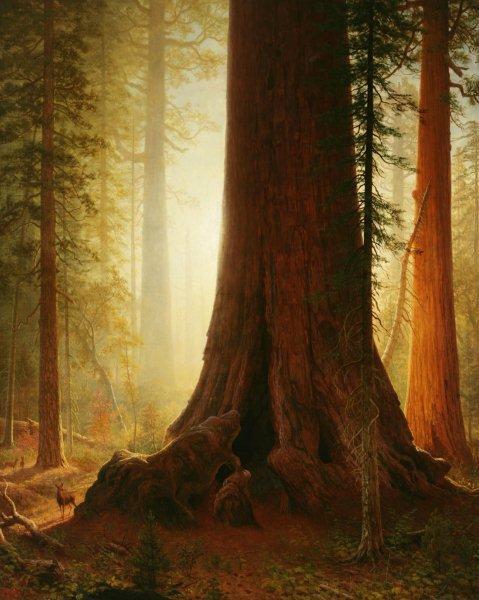 """Kategoria zapach: Albert Bierstadt obraz """"Sekwoja"""" ok. 1860 - 1870 Obraz przedstawia las sekwojowy w promieniach zachodzącego słońca. Dominują barwy ciepłe. Na pierwszym planie są to ciemne kolory: brązy, zielenie. Na drugim planie - kolory jasne: pomarańcze, brązy, żółcienie."""