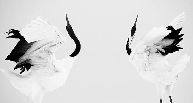 """Copyrights: Stefano Unterthiner """"Żurawia doskonałość"""" (źródło: materiały prasowe organizatora)"""