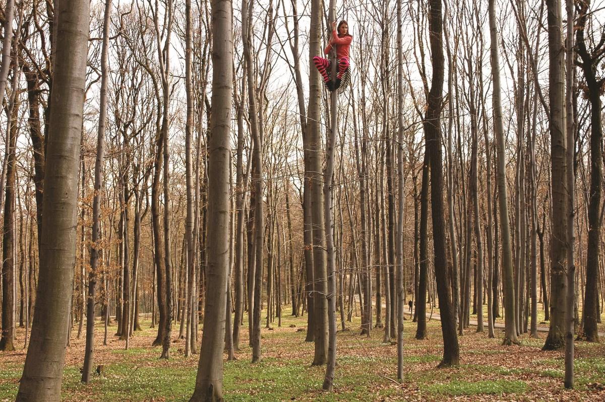 """Cecylia Malik """"191 Drzewo, Buk, 03.04.2010, Las Wolski"""" z cyklu """"365 Drzew"""", z kolekcji Bunkra Sztuki w Krakowie (źródło: materiały prasowe organizatora)"""