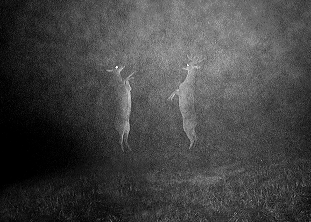 "Erik Berglin, ""Blinded by the light"", 2012 (źródło: materiały prasowe organizatora)"