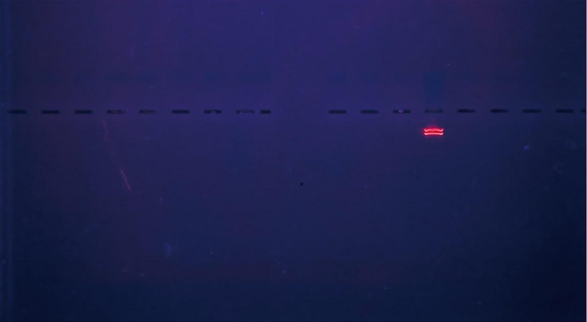 """Wydział Sztuki Mediów. Marta Mielcarek, """"XX"""", Screenshot z projekcji, dyptyk (źródło: materiały prasowe organizatora)"""