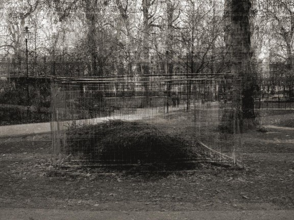 """Dzong Yoon Kim, """"Caged tree"""" (źródło: materiały prasowe organizatora)"""