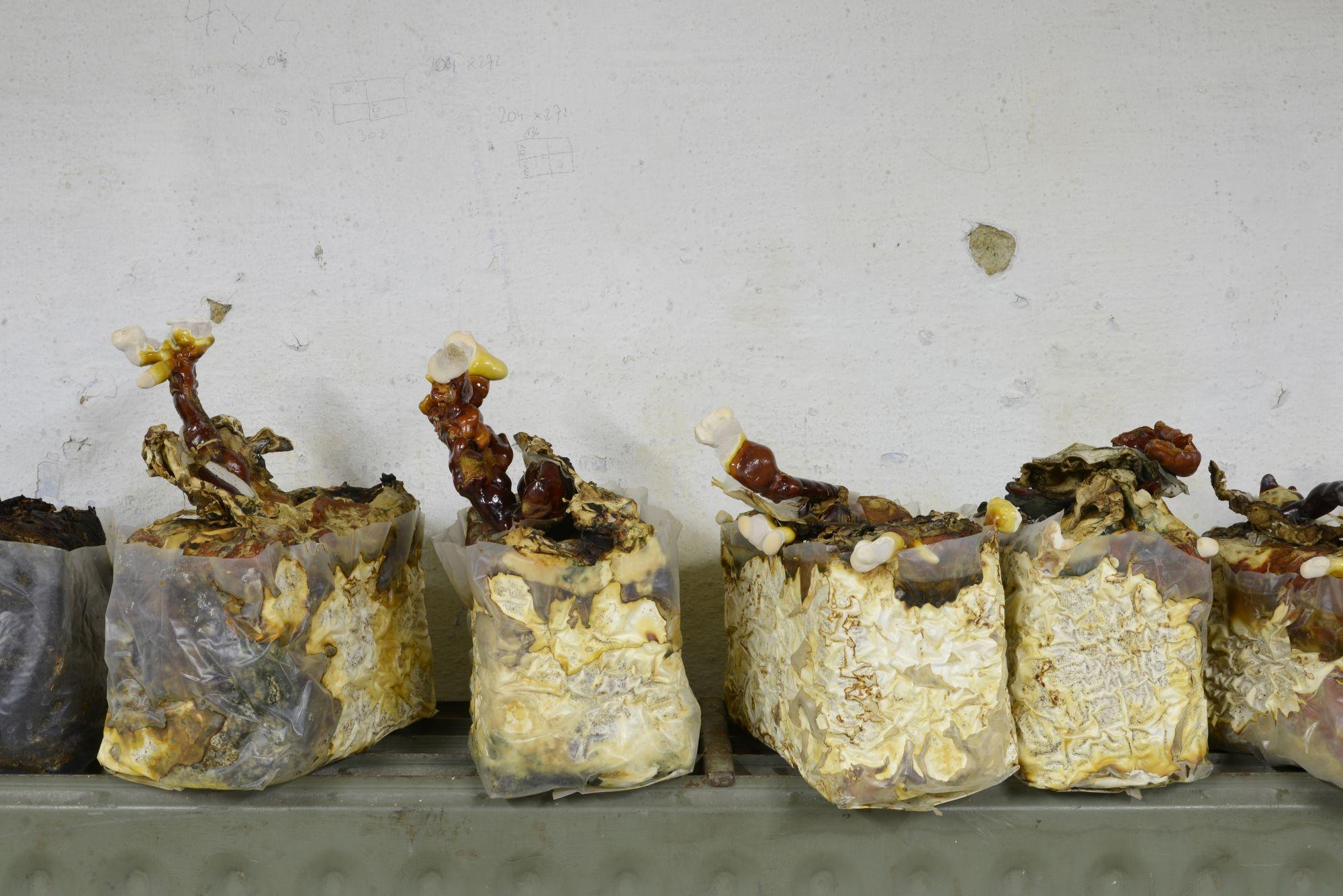"""""""Ogrody"""", Iza Tarasewicz, """"Grzyby reishi"""", instalacja, fot. dzięki uprzejmości artystki (źródło: materiały prasowe)"""