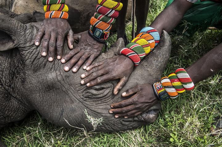 Ami Vitale, USA. Lewa Downs, Północna Kenia. 2. Nagroda, Przyroda, Zdjęcie pojedyncze (źródło: materiały prasowe)