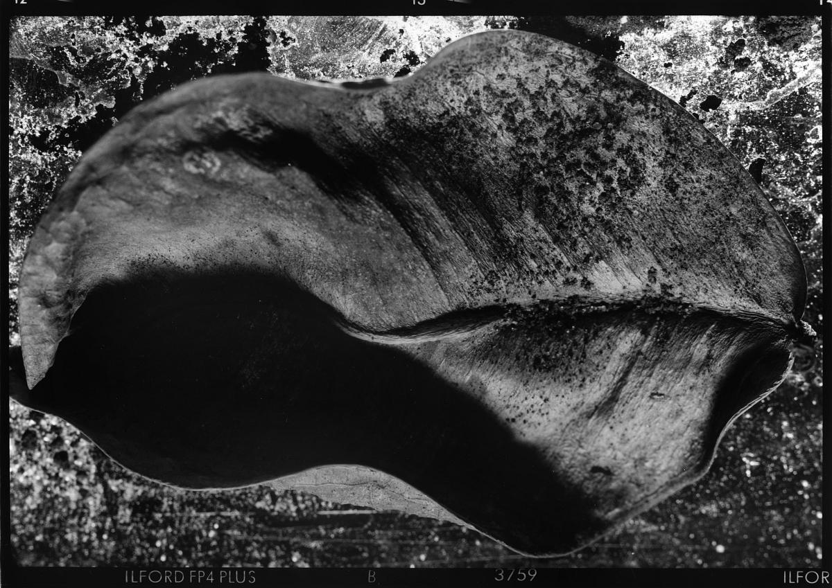 """Fot. Paweł Maciak, wystawa """"Fotografia Materii"""", Galeria Sztuki Wozownia w Toruniu, 2015 (źródło: materiały prasowe organizatora)"""