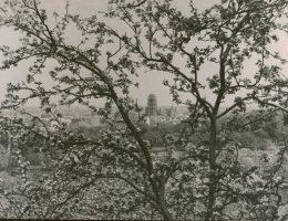 """""""Gdańsk-jabłoniowy ażur"""", Edmund Zdanowski, fot. © Muzeum Narodowe w Gdańsku (źródło: materiały prasowe organizatora)"""