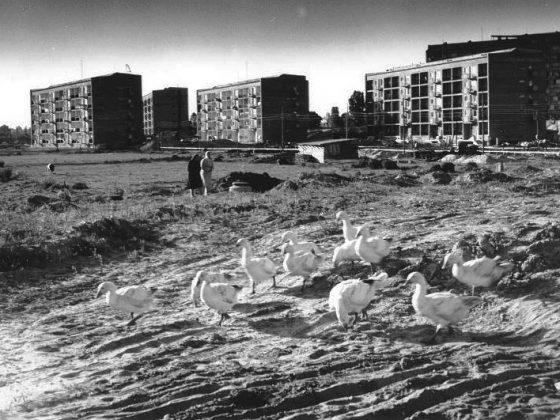 Osiedle Ugorek w budowie, lata 60. XX w., fot. Henryk Hermanowicz (źródło: materiały prasowe organizatora)