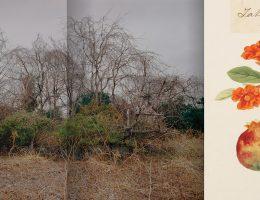 "Antoinette de Jong & Robert Knoth, ""Drzewo i ziemia"" © Antoinette de Jong & Robert Knoth (źródło: materiały prasowe organizatora)"