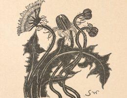 Stanisław Wyspiański, Mniszek pospolity: trzy pąki i kwiat. Życie. tygodnik illustrowany, literacko-artystyczny, Rok 2, 1898, nr 49
