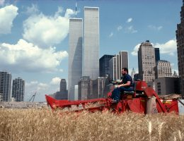 Agnes Denes, Pole pszenicy – konfrontacja: wysypisko śmieci Battery Park, Dolny Manhattan, 1982, dokumentacja fotograficzna, Type-C print, 57,8 x 73cm, © the artist and Leslie Tonkonow Artworks + Projects, New York (źródło: materiały prasowe)